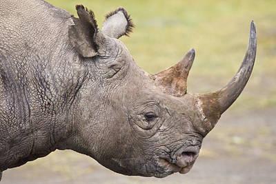 Greater One Horned Rhino Photograph - Black Rhino Great Rift Valley Kenya by Elliott Neep