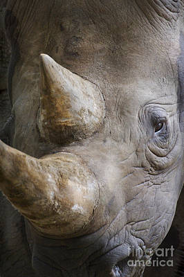 Black Rhinoceros Art Print by  Andrew Forsyth FLPA