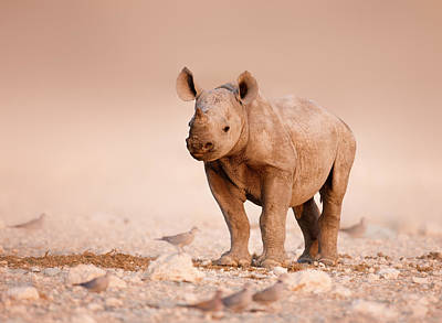 Black Rhinoceros Baby Art Print