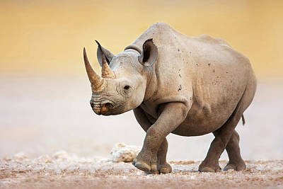 Strong Photograph - Black Rhinoceros by Johan Swanepoel