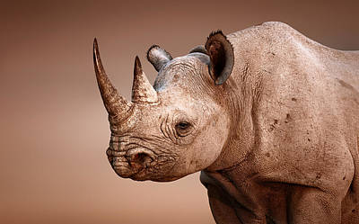 Portraits Royalty-Free and Rights-Managed Images - Black Rhinoceros portrait by Johan Swanepoel