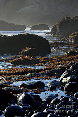 Photograph - Black Rocks Lichen And Sea  by Belinda Greb