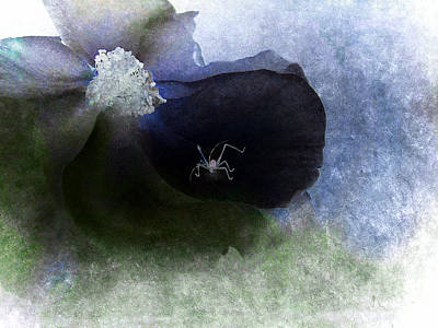 Photograph - Black Rose And White Spider by Louise Kumpf