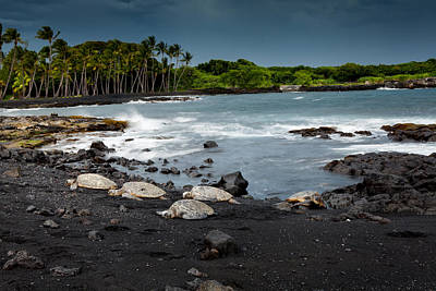 Photograph - Black Sand Beach Turtles by Ed Cilley