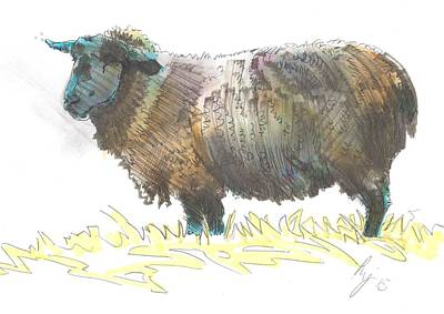 Drawing - Black Sheep Sketch by Mike Jory
