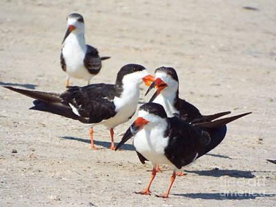 Photograph - Black Skimmers by Audrey Van Tassell