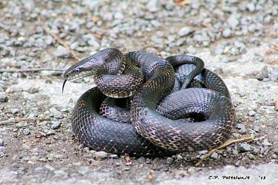 Photograph - Black Snake by Carolyn Postelwait