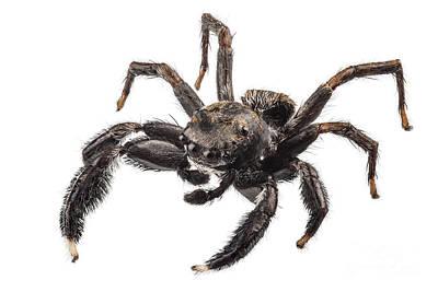 Negative Space - Black Spider by Pablo Romero