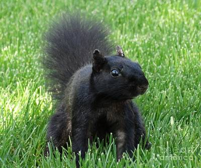 Black Squirrel Art Print