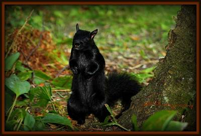 Photograph - Black Squirrel by Michaela Preston