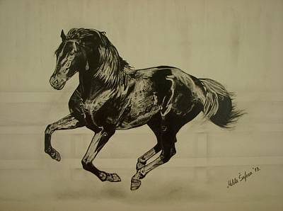 Drawing - Black Stallion by Melita Safran