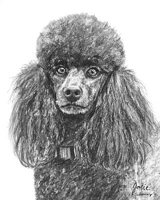 Drawing - Black Standard Poodle Sketched In Charcoal by Kate Sumners