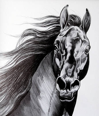 Ink Drawing Drawing - Black Standardbred Stallion by Cheryl Poland