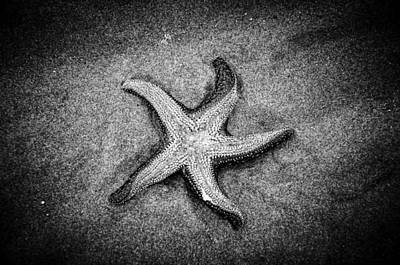 Photograph - Black Star II by Roxy Hurtubise