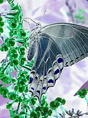 Photograph - Black Swallowtail Abstract  by Kim Galluzzo Wozniak