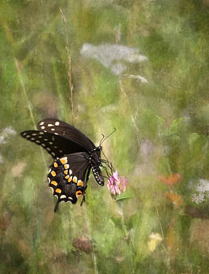 Photograph - Black Swallowtail Beauty by Dale Kincaid