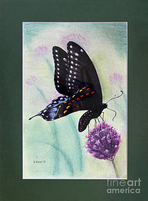 Photograph - Black Swallowtail Butterfly By George Wood by Karen Adams