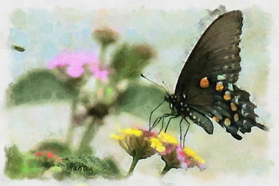 Black Swallowtail Art Print by Lorri Crossno