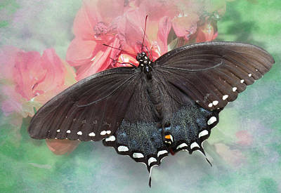 Photograph - Spicebush Swallowtail by David and Carol Kelly