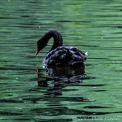 Black Swan I Art Print by Marie  Cardona