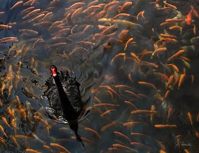Photograph - Black Swan by Joe Bonita