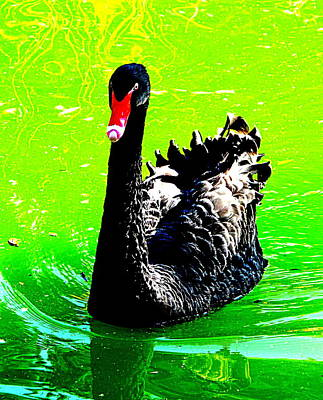 Black Swan Art Print by John King