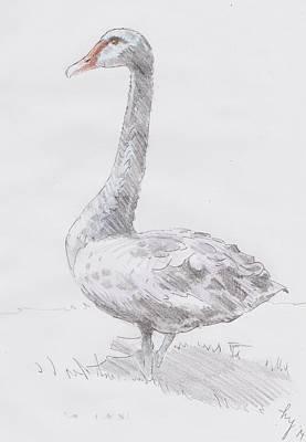 Devon Mixed Media - Black Swan by Mike Jory