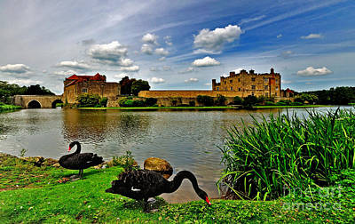 Black Swans At Leeds Castle II Art Print