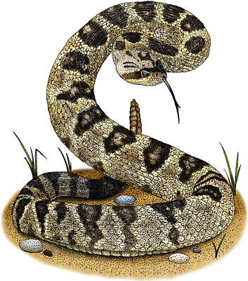 Photograph - Black-tailed Rattlesnake by Roger Hall