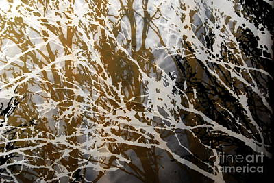 Photograph - Forest Abstracts - Black Tan Cream 2 Of 10 by Jacqueline M Lewis