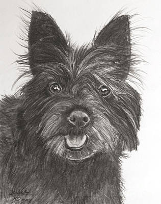 Drawing - Black Terrier Drawing by Kate Sumners