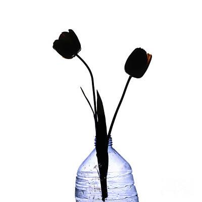 Black Tulips Art Print by Bernard Jaubert