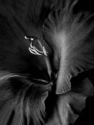 Black Velvet Gladiolia Flower Art Print