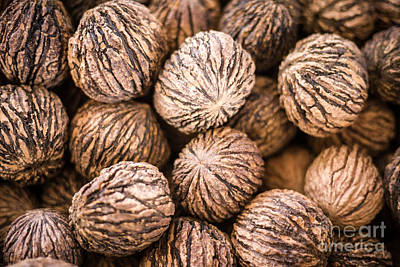 Walnut Tree Photograph - Black Walnuts by Edward Fielding