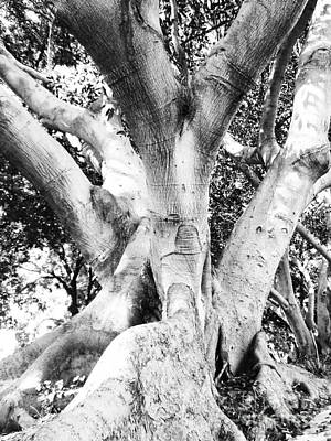 Photograph - Black White Tree Large Trunk Nature Sculpture Fall Fine Art Photography Deco by Marie Christine Belkadi