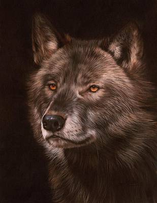 Animals Paintings - Black Wolf by David Stribbling