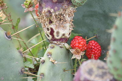 Blackberries Are Coming Art Print by Lorri Crossno