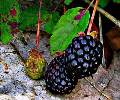 Photograph - Blackberries by Debbie Sikes