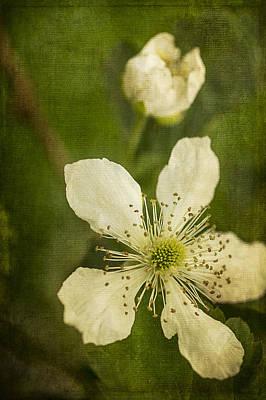 Photograph - Blackberry Flower With Textures by Wayne Meyer