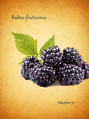 Blackberries Wall Art - Photograph - Blackberry by Mark Rogan