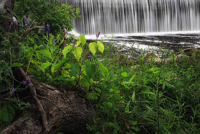 Poison Ivy Photograph - Blackberry River by Bill Wakeley