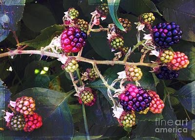 Lady Bug - Blackberry Season by Janice Pariza