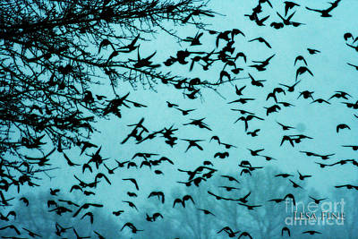 Photograph - Blackbird Flock by Lesa Fine