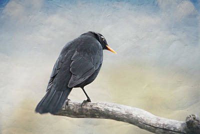 Blackbird Mixed Media - Blackbird by Heike Hultsch