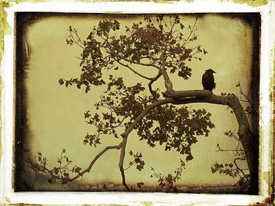 Vintage Blackbird In A Tree Art Print