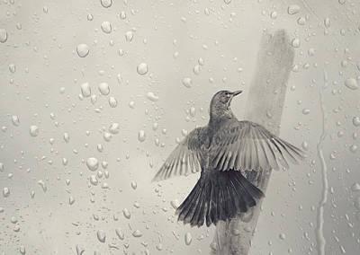 Blackbird Mixed Media - Blackbird In The Rain by Heike Hultsch