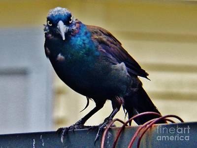 Painting - Blackbird  by Judy Via-Wolff