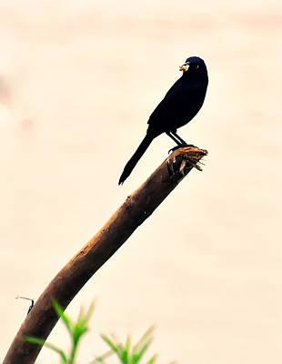 Blackbird Digital Art - Blackbird On A Stick by Chris Flees