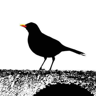 John Tidball Digital Art - Blackbird On A Wall by Bishopston Fine Art