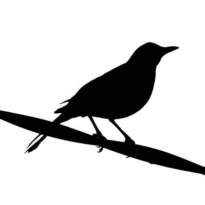 Blackbird Photograph - Blackbird Silhouette by Bishopston Fine Art